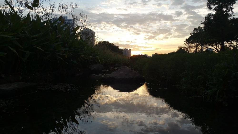 Evening Over Bishan-Ang Mo Kio Park 3